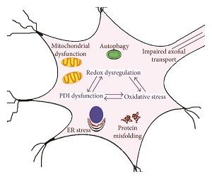 Cellular Stress Testing